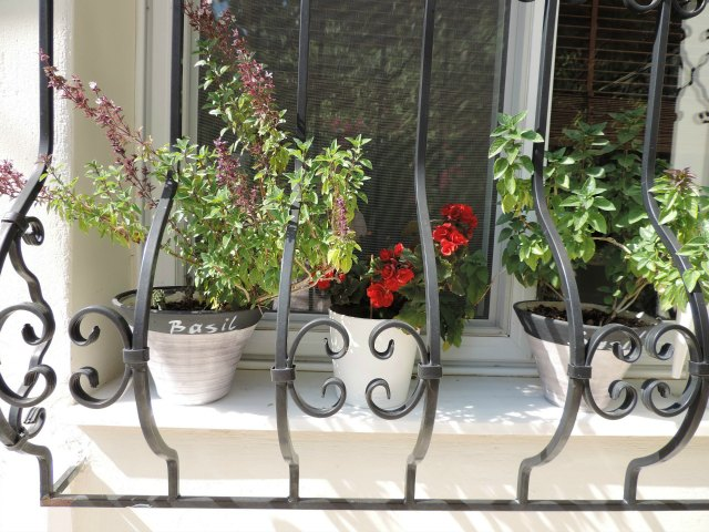 """Planters with a black stripe on top part and the word """"basil"""" resting upon my kitchen window's ledge."""