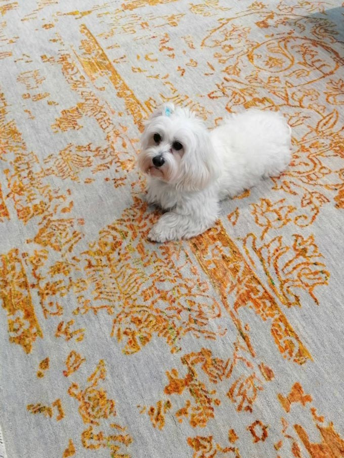 A beautiful area rug with a broken design and a white dog sitting atop.
