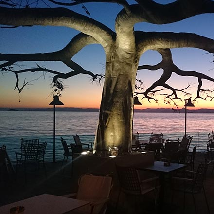 An artificial tree acting as a decor at an outdoor space of a coffee house by the seaside just after sunset. Image by Velvet.