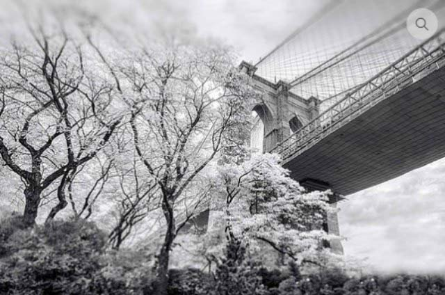 A black and white image by John Josmopoulos of blooming trees by Brooklyn bridge pier. Image owned by House of Photography.