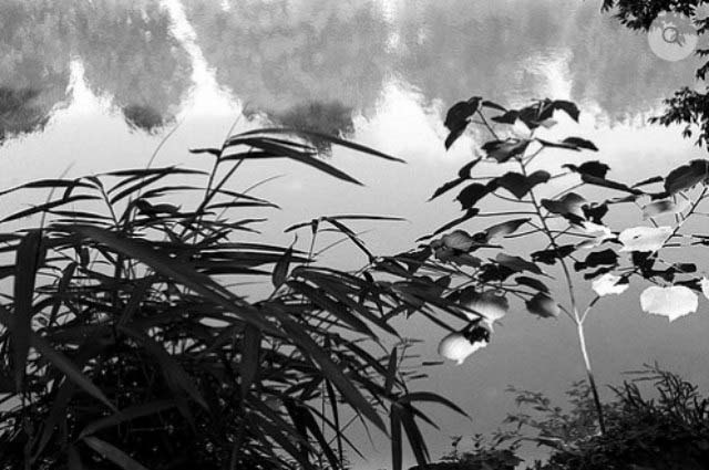 A black and white image by John Demos of plants reflecting in a body of water