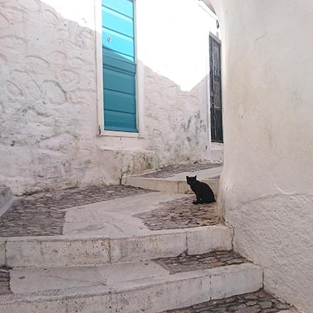 A black cat in a alley between white washed houses in Ano Syros. Image by Velvet.