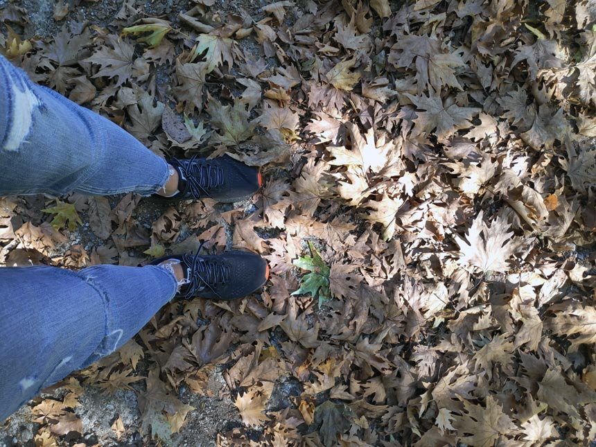 Velvet's feet on a leafy ground while in the woods.