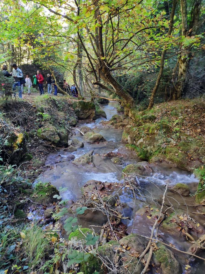 A small stream inside the woods, with people walking by a trail. Image by Velvet.