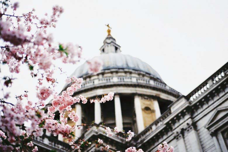 Partial view of Saint Paul's Cathedral roof with cherry blossom showing on the left