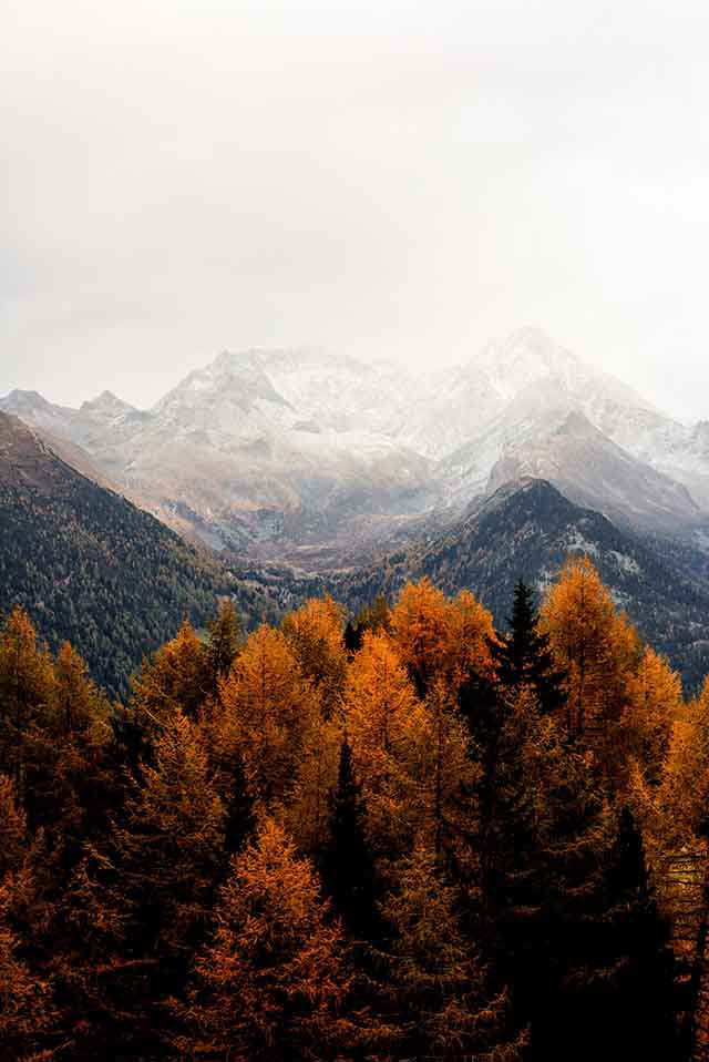 A ridge of mountains. In the foreground trees in autumn colors and in the background white snow mountain tops