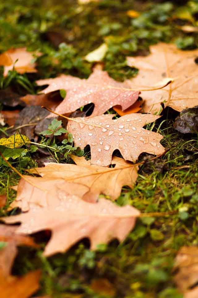 Autumn leaves on a grassy ground