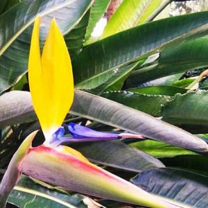 Detail of an exotic yellow slim flower in contrast to its long green point leaves. Image by Elisabeth.