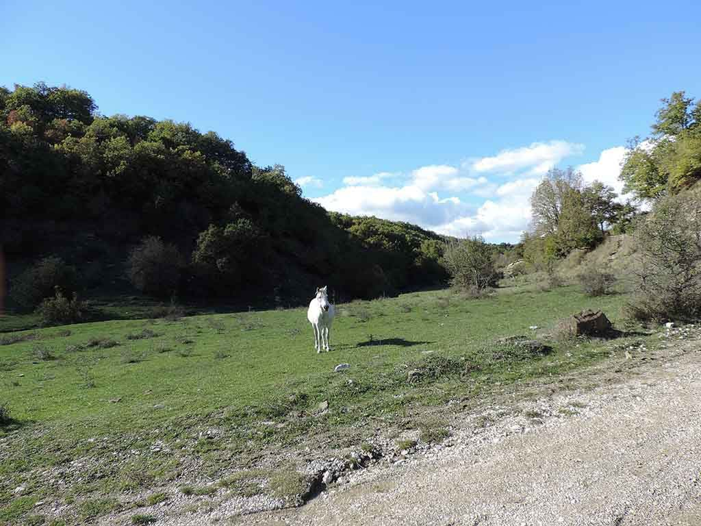 A white horse grazing in the sun, free in nature