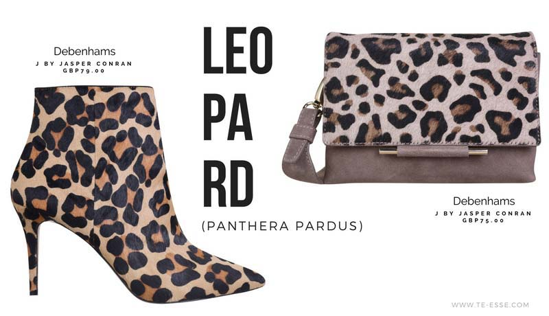 A leopard print ankle book will always look sexy, while a purse with leopard print will make any outfit more edgy. Both images by Debenhams.