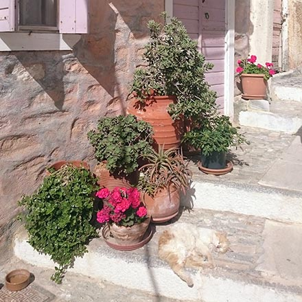 A cat laying on its back on an alley with stairs in Ano Syros. Image by Velvet.
