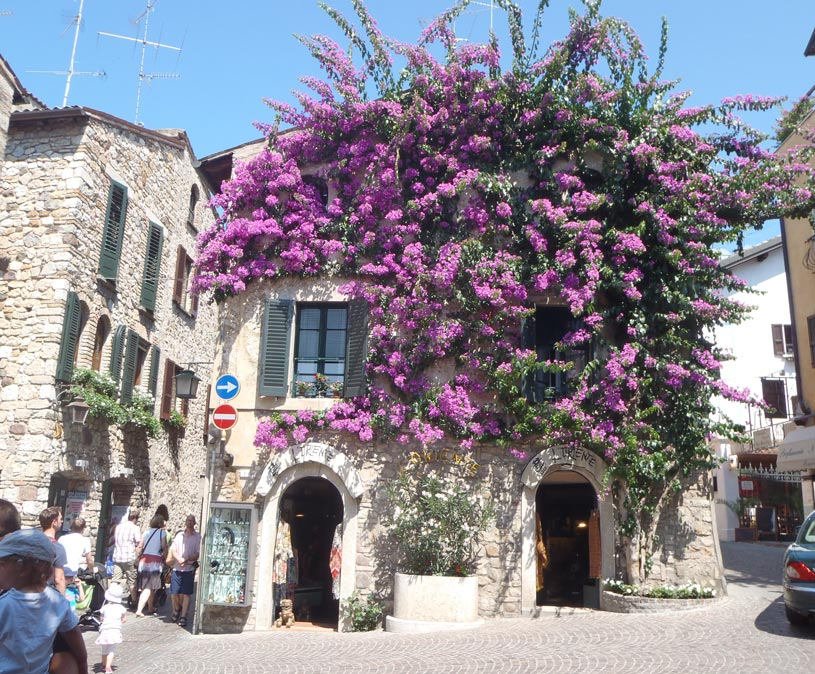 A crossroad in the town of Sirmione, where one two story building is covered with a blooming purple bougainvillea.