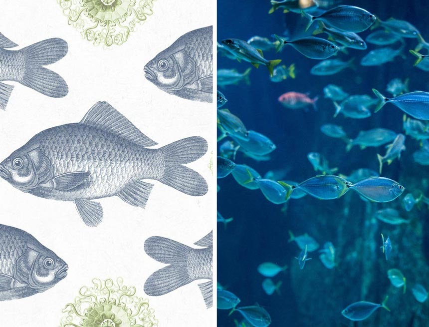 Left image of a fish print on an inspiration wallpaper by Mind the Gap. Right image of real fish in deep blue waters.