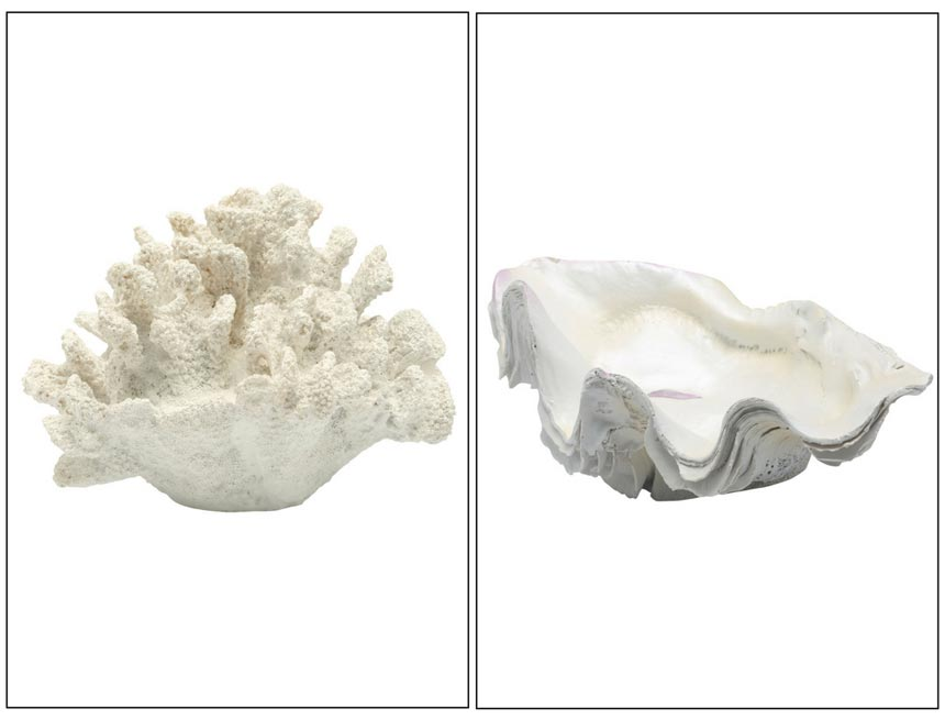 A white coral decor on the left and a open shell on the right. Both images by M&Co.