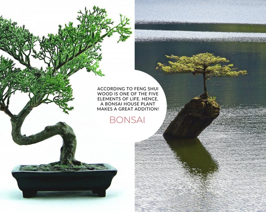 Two images of Bonsai trees. The left image is a house plant. The right image is a Bonsai tree outdoors surrounded by a water body.
