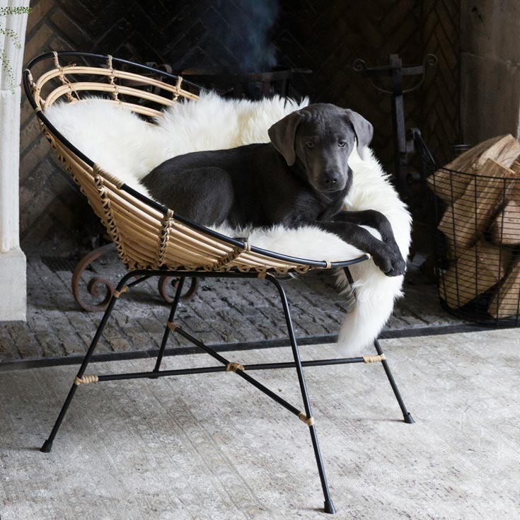 How cute! A black puppy lying on a white sheep rug laid on a round rattan chairs.