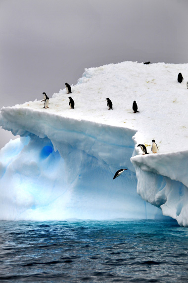 A portrait image of Antarctica with penguins on an iceberg. Image by Marina Vernicos.