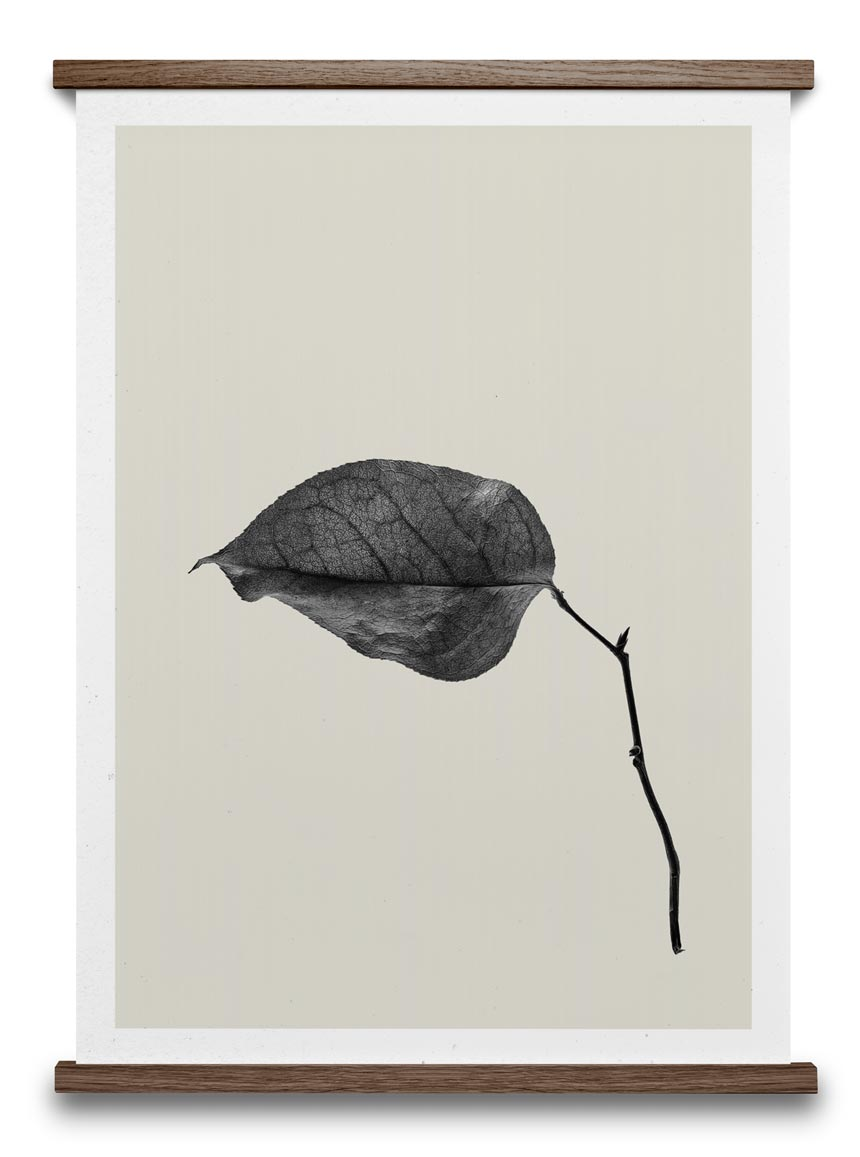 A black and white image of a drifting leaf. Image by Nest.co.uk.