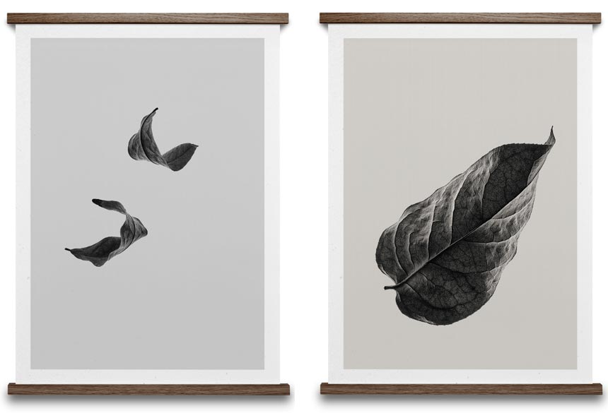 Two black and white images of drifting leaves. Images by Nest.co.uk.