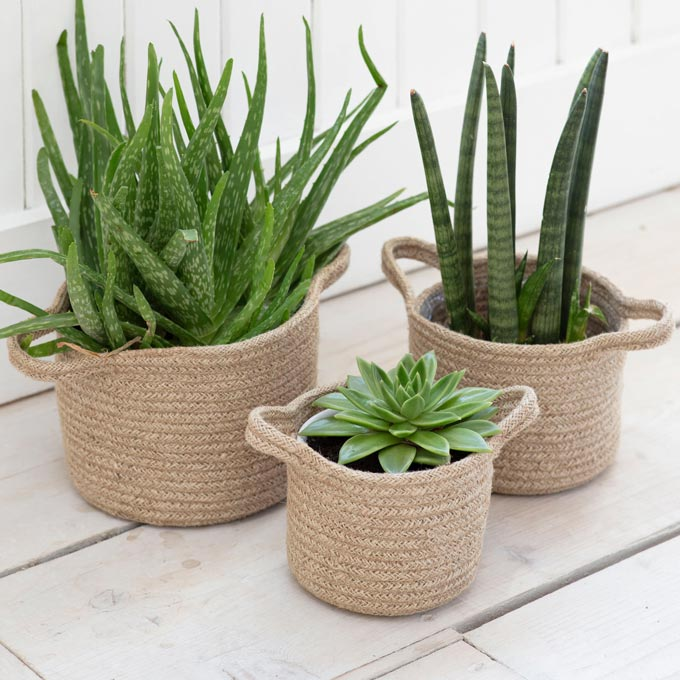 A set of three jute rope plant pots for showing off plants. Image by Lime Lace.