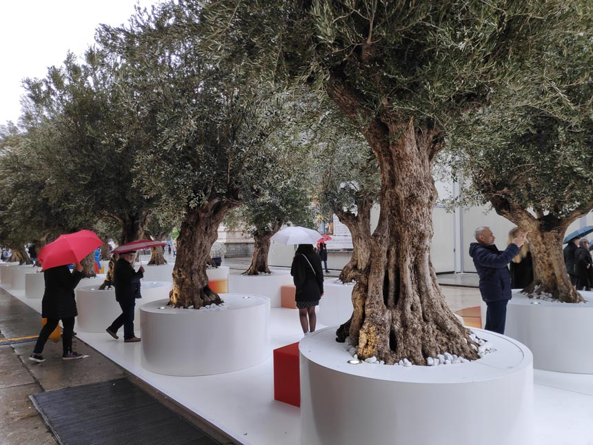 "An installation by the Duomo in Milan during the Design Week with a ""Boulevard"" of olive trees."