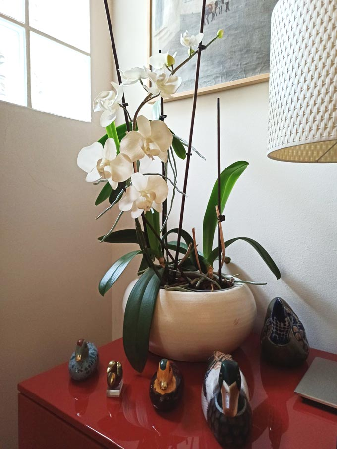 Potted orchids in bloom on the corner of a sideboard in a Living Coral color.