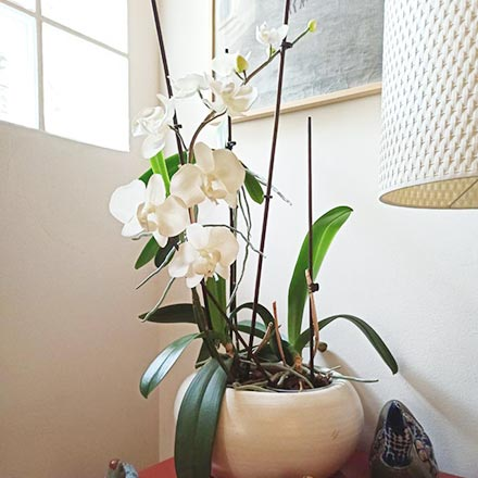 Potted orchids in full bloom. Real or fake? My best orchid decor hack.